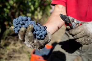 Ca del Bric - vini biologici del piemonte