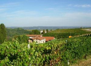 Ca del Bric - vini biologici del piemonte senza solfiti